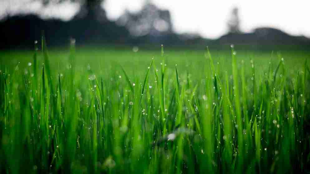 Dew Factor In Cricket Explained – Effects of Dew on Match